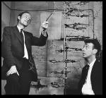 Watson-e-Crick-struttura